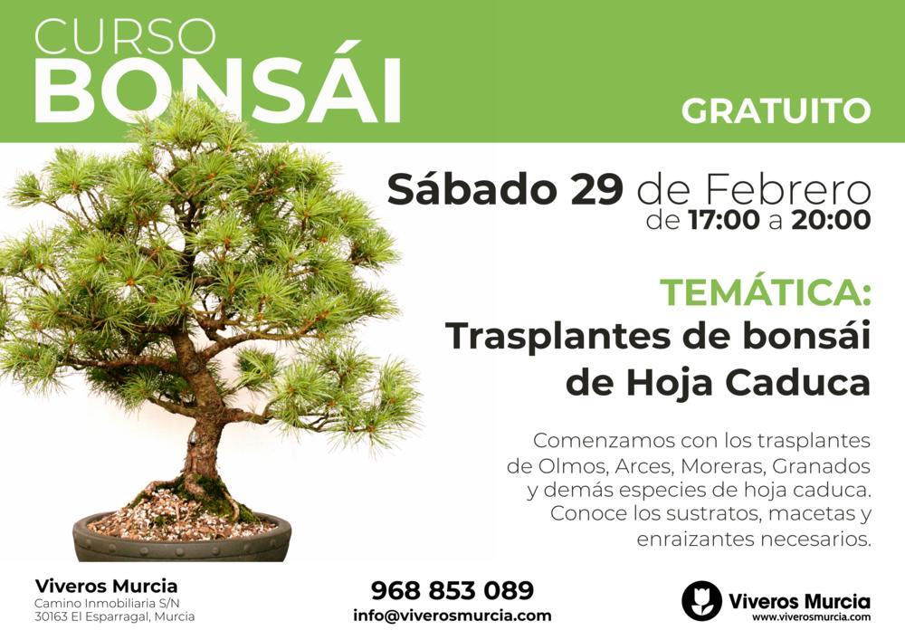 Taller de Bonsái: trasplante de bonsáis de hoja caduca, próximo Sábado 29 de Febrero