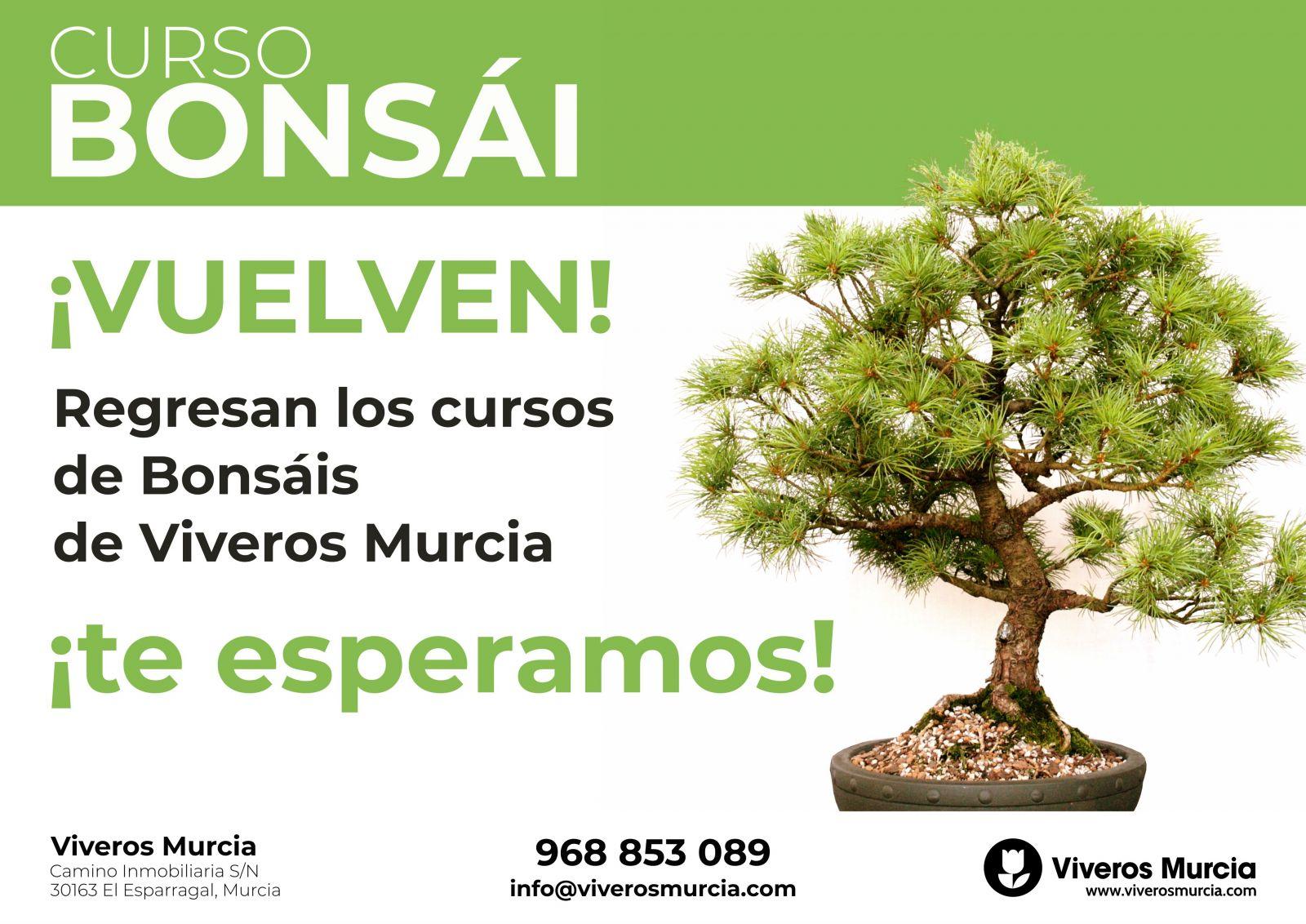 Regresan los cursos de Bonsái de Viveros Murcia