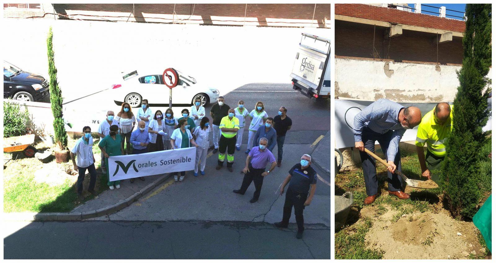 Viveros Murcia dona un ciprés al Hospital Morales Meseguer