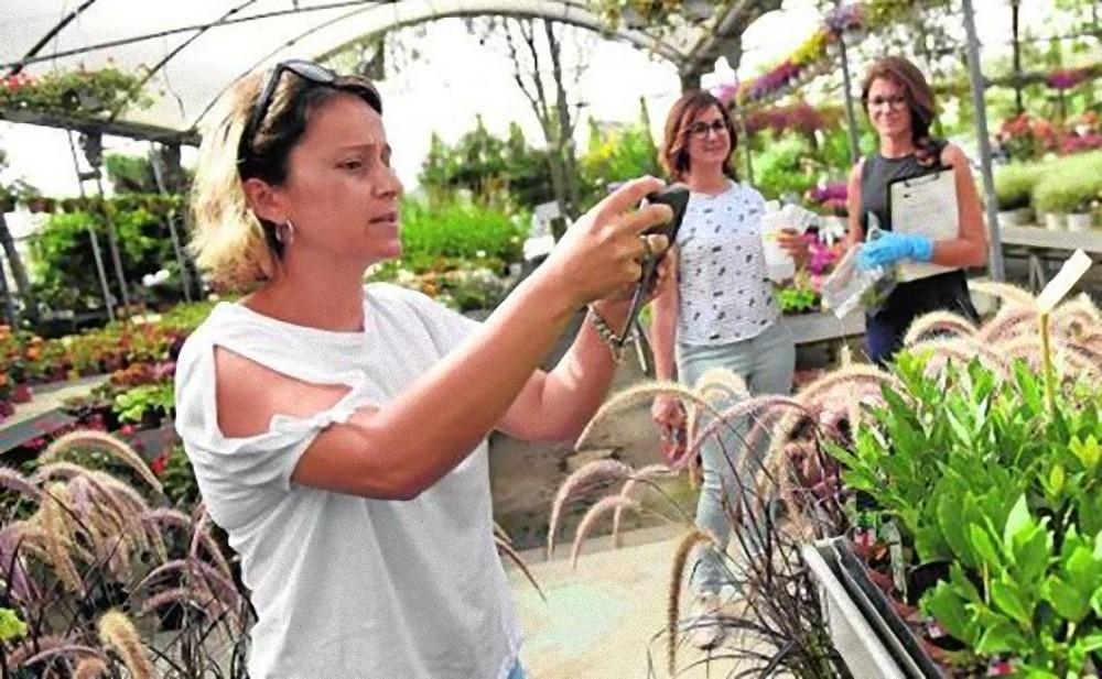 Los meticulosos controles de Viveros Murcia dan sus frutos