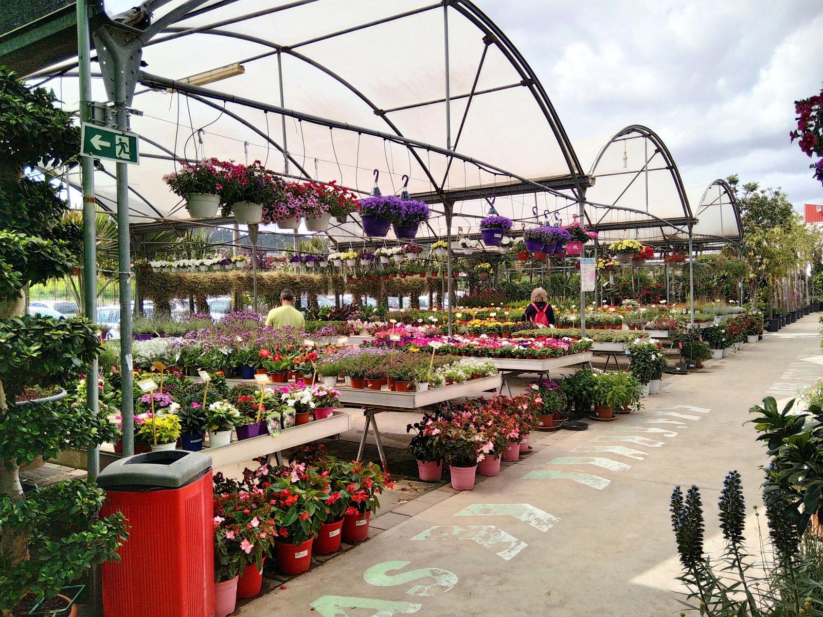 Las plantas colorean los balcones y terrazas de los murcianos