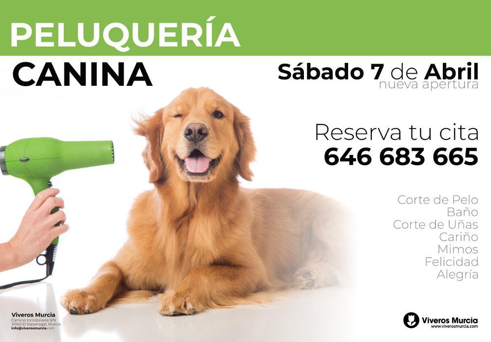 Peluquería Canina Viveros Murcia
